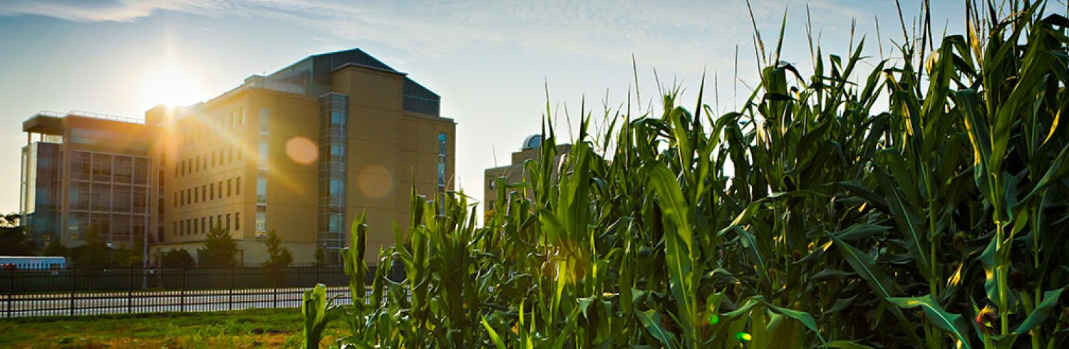 Sanborn Field is located on the MU Campus in Columbia. Sanborn Field was initiated in late 1888 by Dean J. W. Sanborn to demonstrate the value of crop rotations and manure in grain crop production.