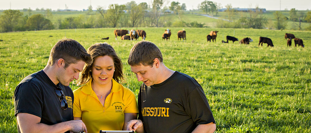 CAFNR Students at South Farm use new technology at the MU Beef Research and Teaching Farm.