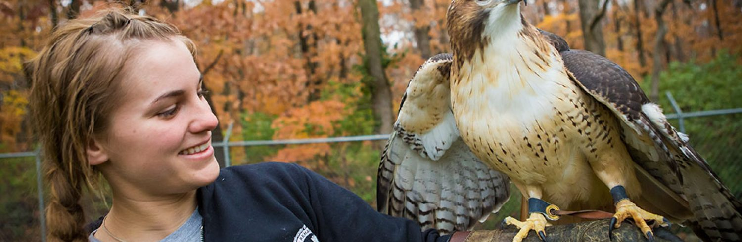 Volunteer Abby Rainwater handles Jacob the Red-tailed hawk at the Raptor Rehabilitation Project on the MU Campus.