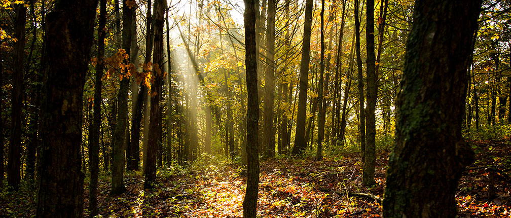 Forests in the fall at Baskett Wildlife Research and Education Center.