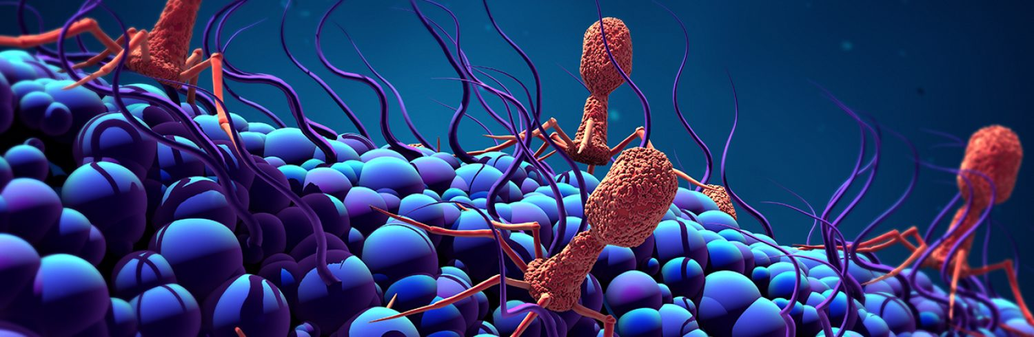 3d illustration Bacteriophage infecting bacterium