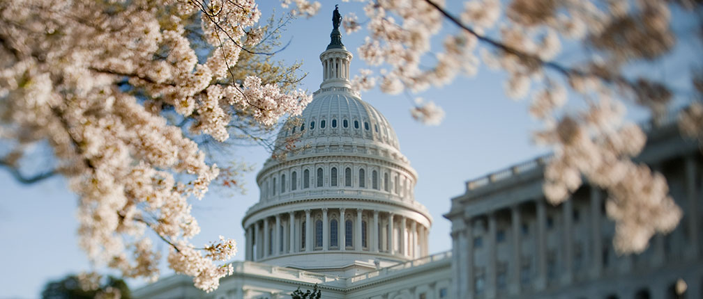 Exterior of the U.S. Capitol in spring.